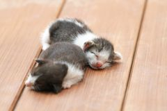 Kittens sleeping. On brown wooden floor Stock Images