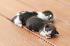Kittens sleeping. On brown wooden floor Royalty Free Stock Images