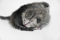 Kittens sleeping striped newborn eyes closed Stock Images