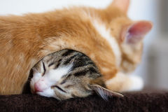 Kittens sleeping on top of another Royalty Free Stock Photo