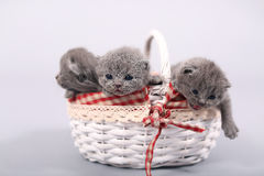 Kittens staying in a basket Stock Photo