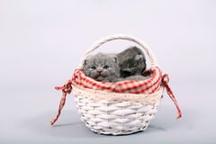 Kittens staying in a basket Stock Images