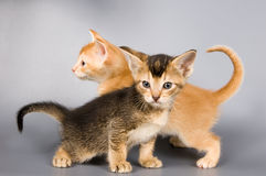 Kittens in studio Royalty Free Stock Photo