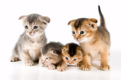 Kittens in studio. On a neutral background Stock Photos