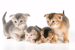 Kittens in studio. On a neutral background Royalty Free Stock Photography