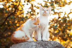 Kittens at sunset Royalty Free Stock Image