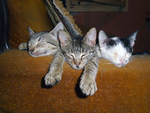 KITTENS. Three poor kitten sleeping on the couch stock images