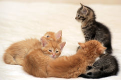 Kittens together Stock Photo
