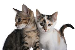 Kittens two. Two cute kittens standing next to each other royalty free stock photo