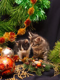 Kittens under a New Year tree Royalty Free Stock Photo