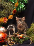 Kittens under a New Year tree Stock Image