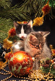 Kittens under a New Year tree Stock Images