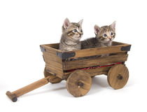 Kittens in a wagon Royalty Free Stock Photography