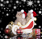 kittens wearing red christmas Santa hat Stock Image