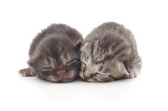 Kittens on a white background Royalty Free Stock Image