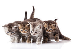 Kittens on a white background Royalty Free Stock Images