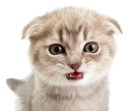 Kittens on a white background Stock Image