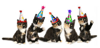 5 Kittens on a White Background With Birthday Hats Royalty Free Stock Photography