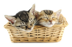 Kittens in wicker basket Stock Photography