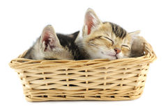 Kittens in wicker basket Royalty Free Stock Images