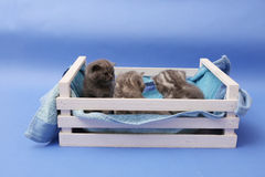 Kittens in a wooden crate Stock Images