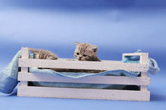 Kittens in a wooden crate Stock Photos