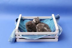 Kittens in a wooden crate Stock Photography