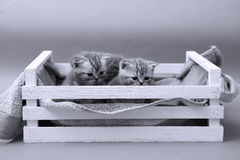 Kittens in a wooden crate Royalty Free Stock Image