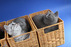 Kittens in wooden crates, close-up view Stock Photos