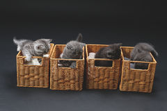 Kittens in a wooden crates Stock Images