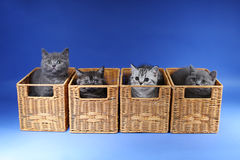Kittens in a wooden crates Stock Photos