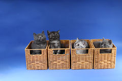Kittens in a wooden crates Royalty Free Stock Images