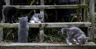 Kittens on Wooden Stairs stock photo