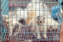 Kittenst persa em uma gaiola Fotos de Stock Royalty Free