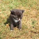 Kittie negro Foto de archivo