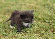 Kittie noir Photographie stock