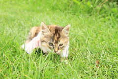 Kittie in t-shirt Royalty Free Stock Photos