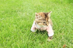 Kittie in t-shirt Royalty Free Stock Images
