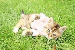 Kittie in t-shirt Stock Image