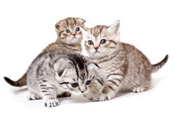 Kitties Royalty Free Stock Photos