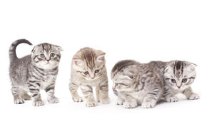 Kitties Stock Image