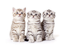 Kitties Royalty Free Stock Photo