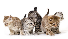 Kitties Stock Photo