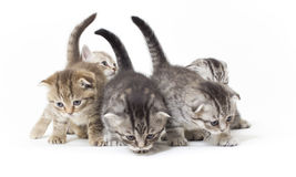 Kitties Stock Photos