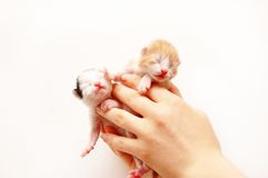 Kitties Stock Photography
