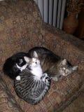 Kitties royalty free stock photos