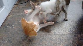 Kitties stock photo