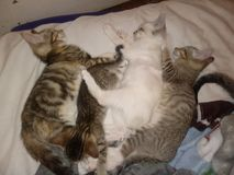 kitties royalty-vrije stock afbeelding