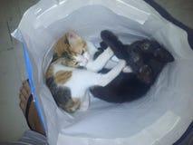 Kitties. Sushi and sasha having a nap Stock Image