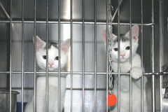 Kitties which want to be adopted. Royalty Free Stock Photos